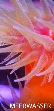 Meerwasser Aquarium Futter Technik Wasserpflege Fische Wirbellos