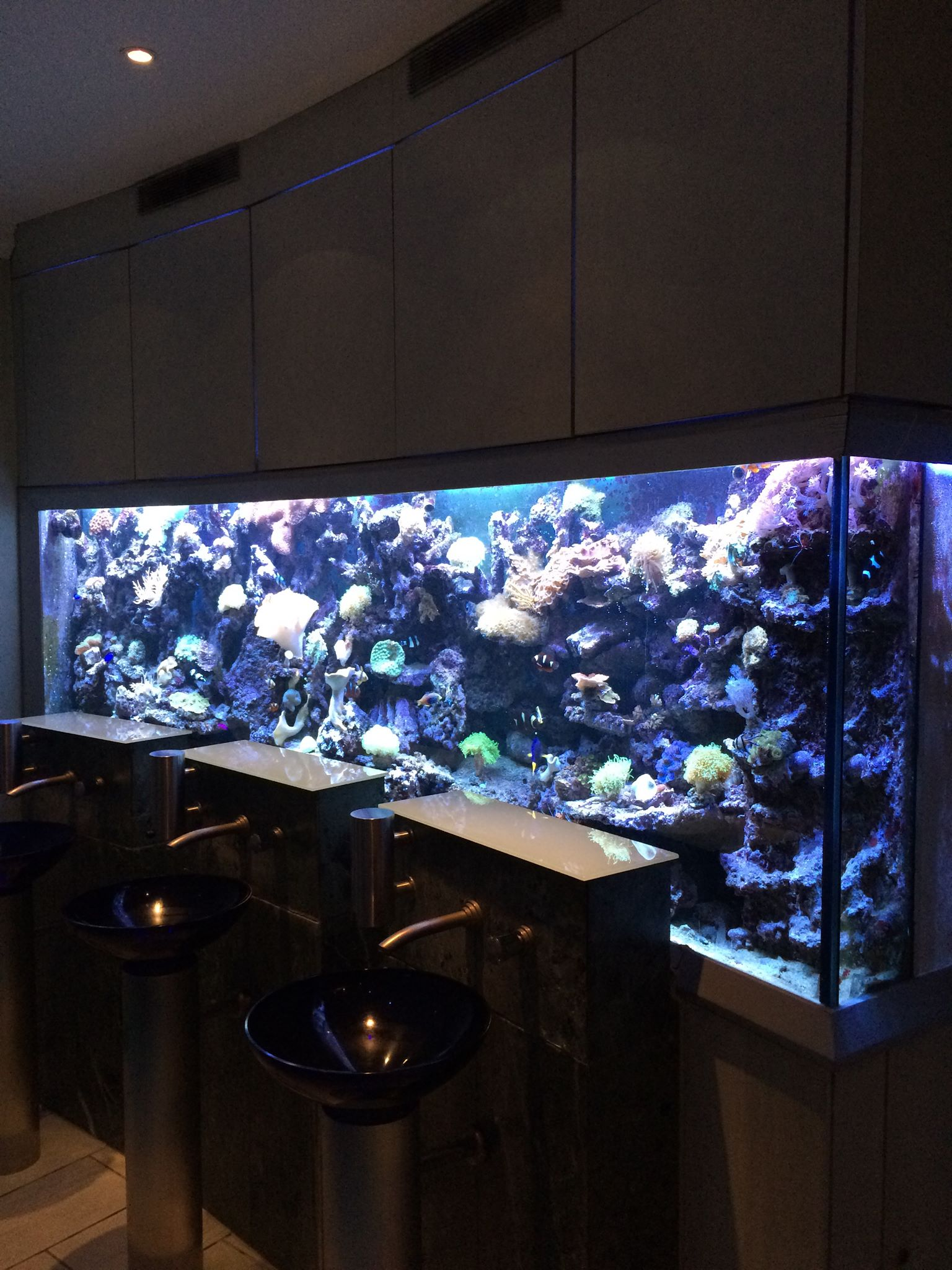 3 meter aquarium aqua tropica. Black Bedroom Furniture Sets. Home Design Ideas