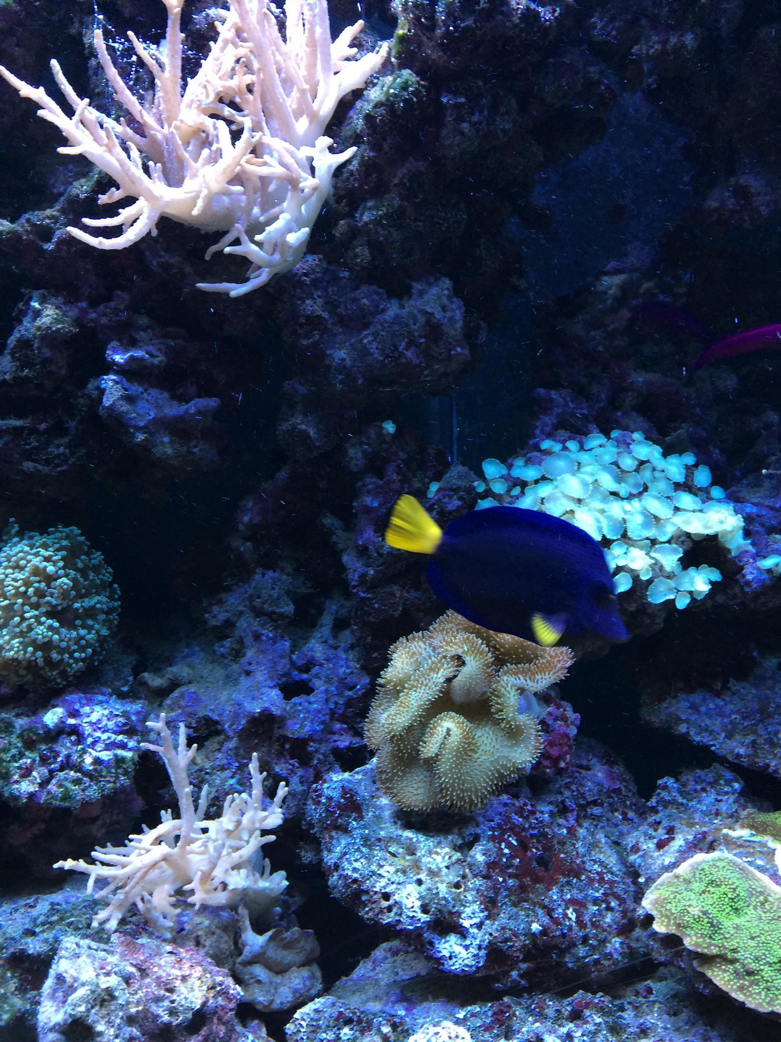 3 Meter Aquarium