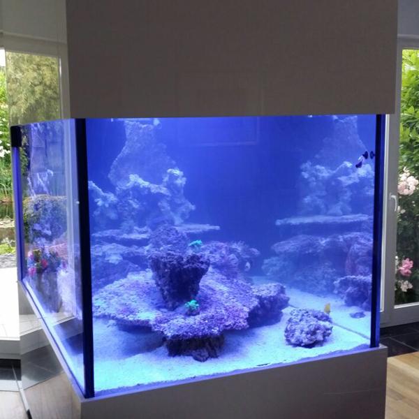 Wie richte ich ein Meerwasseraquarium ein? - 24 Stunden nach Einrichtung