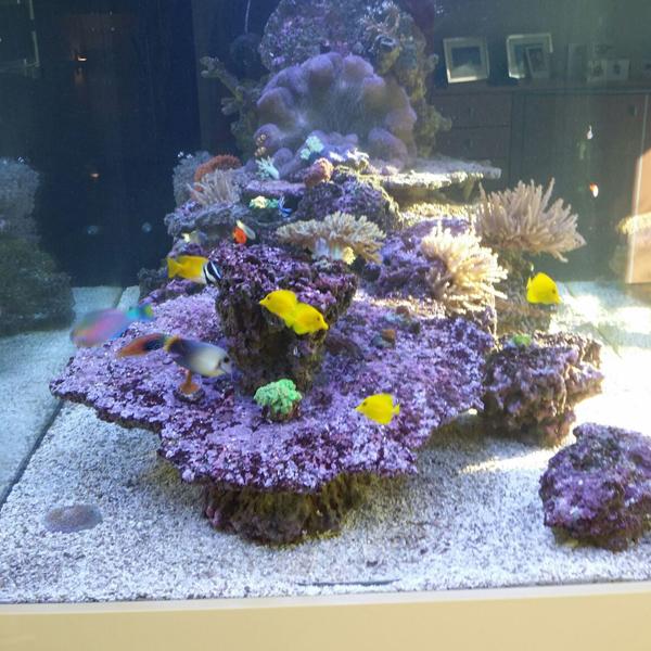 Wie richte ich ein Meerwasseraquarium ein? - Zwei Monate später!
