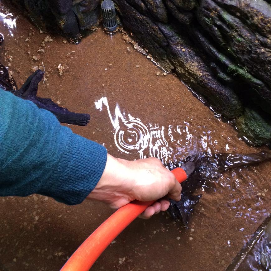 Meine Faszination für Aquascaping - Auffüllen mit Wasser