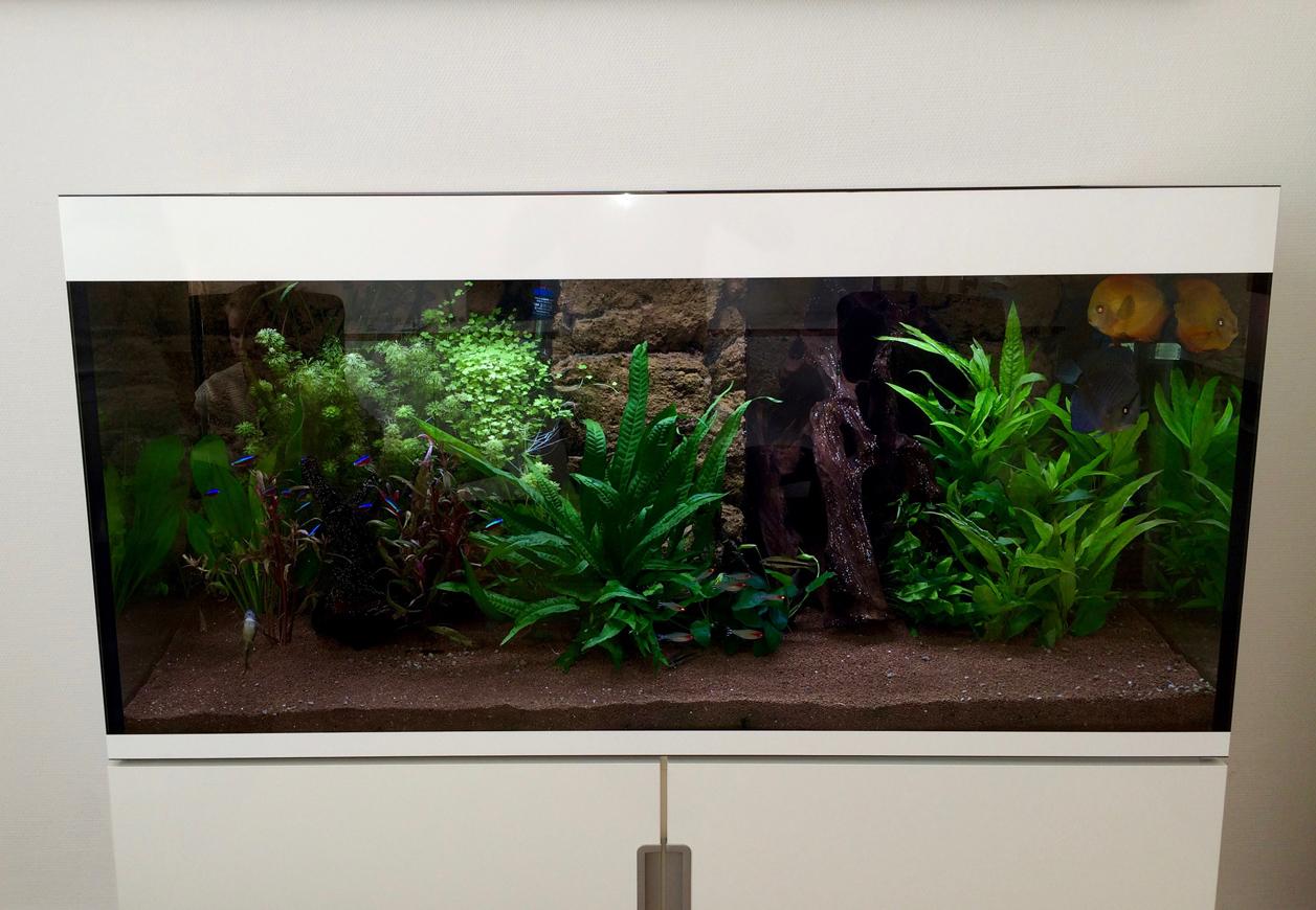 s wasser aquarium in einer arztpraxis in k ln aqua tropica. Black Bedroom Furniture Sets. Home Design Ideas