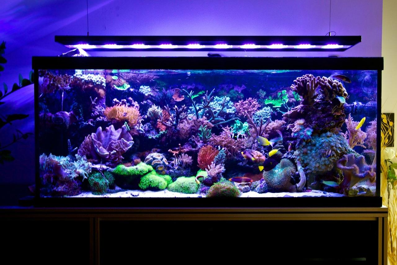 riffaquarium mit vertex illumina aqua tropica. Black Bedroom Furniture Sets. Home Design Ideas
