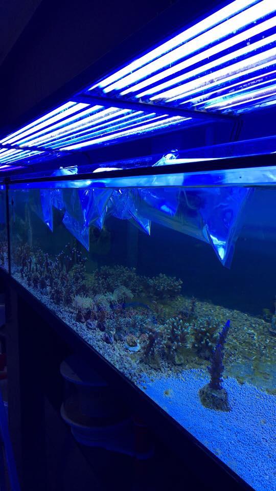 Schöne Korallen und Fische sind heute...