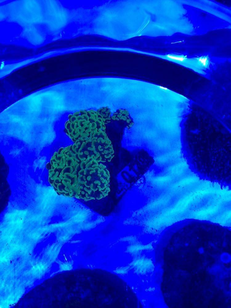 Wir haben gestern wieder tolle Korallen...