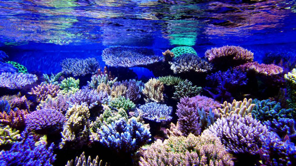 ati essentials im meerwasseraquarium aqua tropica. Black Bedroom Furniture Sets. Home Design Ideas